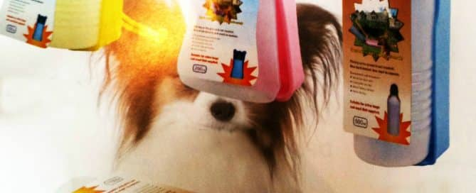 Promotional-Idea-Travel-Bowl-for-Pets.jpg